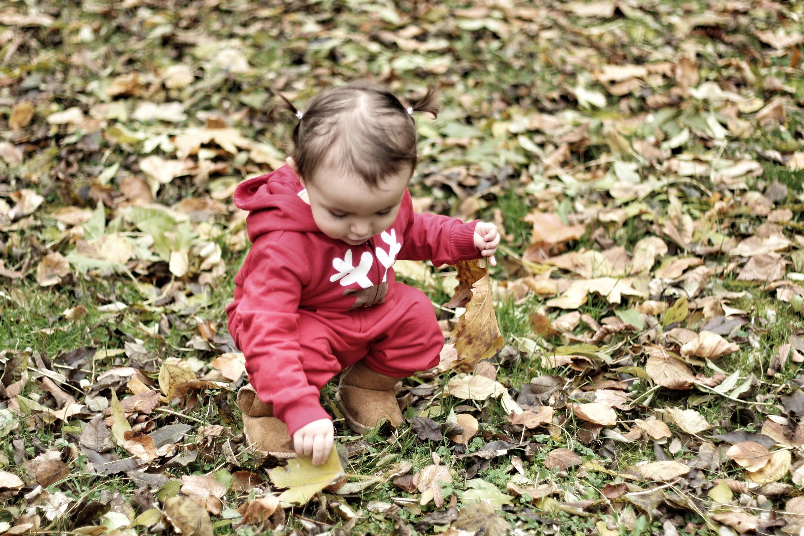 Les feuilles mortes se ramassent à la pelle ….
